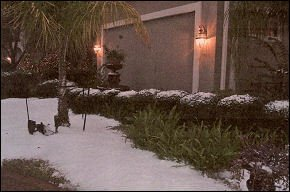 Winter Snow Theme Party